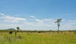 Elephant Landscape